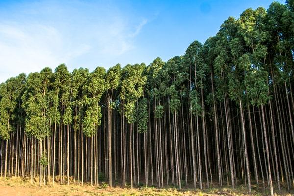 Filièere bois responsable exemple du bois illégal brésilien